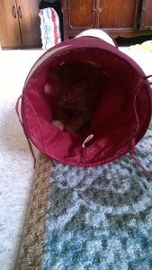 Buttercup hiding in his tunnel